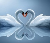 Real_Beautiful_Swans